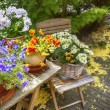 Stock Photo: Summer flower garden