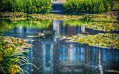 Summer lake — Zdjęcie stockowe