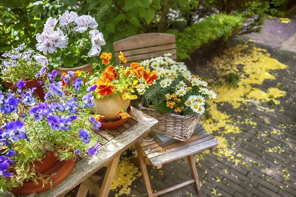 Flowers by Season  Winter Flowers Summer Spring Flowers