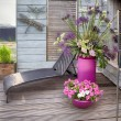 Home flowers terrace — Stock Photo