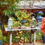 Autumn garden — Стоковое фото