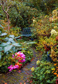 Autumn garden — Stock Photo