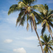 Stock Photo: Palm trees by ocean