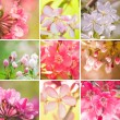Beautiful Flowering Trees Collage — Stock Photo #25750011