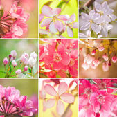 Beautiful Flowering Trees Collage — Stock Photo