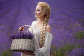 Romantico ritratto di bella donna sul campo di lavanda — Foto Stock