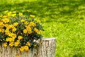 Kámen ve stromu kmen socha v prostředí nádvoří s žluté sedmikrásky — Stock fotografie