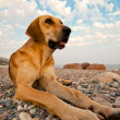 A Dog On The Beach — Stock Photo