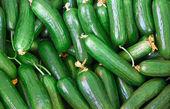 Organic Fresh Cucumbers — Stock Photo