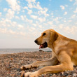 Playful Dog On The Beach — Stock Photo