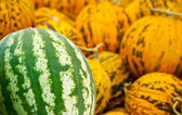 Organic Watermelon and Casaba Melon Heap — Stock Photo