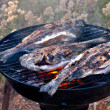 Sea Bream Fish Grilling On BBQ — Stock Photo #31576075