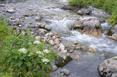 Clean mountain river of grass and flowers — Stock Photo