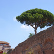 Roman ancient wall with pine tree against blue sky and church on background — Stock Photo #47818543