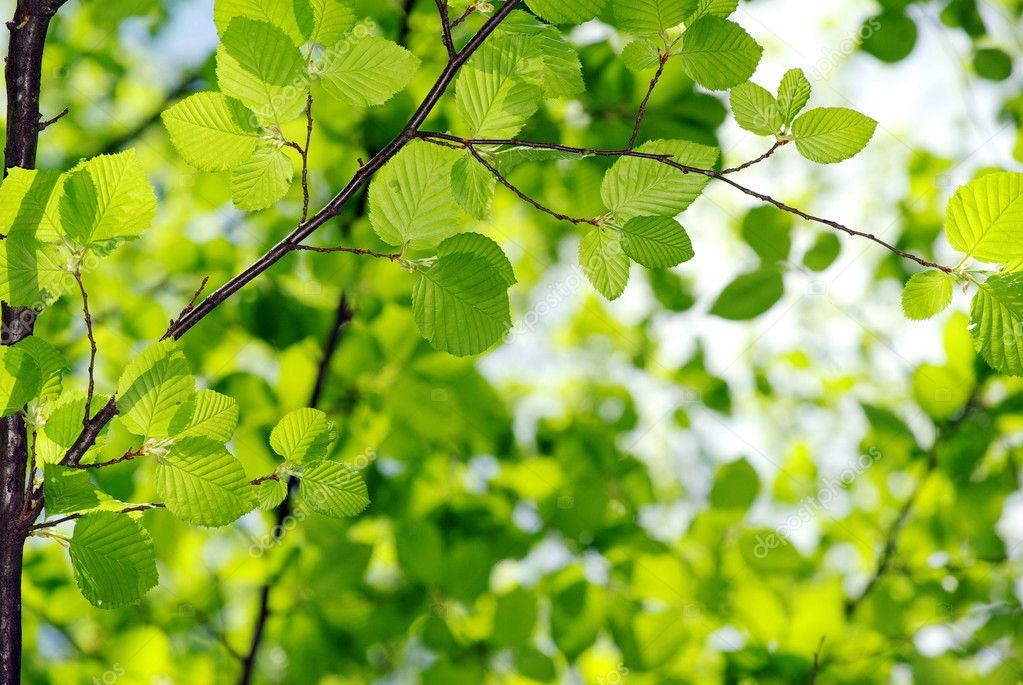灯箱绿色植物图片素材
