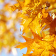 Autumn leaves — Stock Photo #12806561