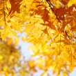 Autumn leaves — Stock Photo #12806565