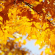 Autumn leaves — Stock Photo #12806573
