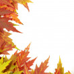 Autumn leaves — Stock Photo #12806589