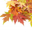 Autumn leaves — Stock Photo #12806590