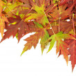 Autumn leaves — Stock Photo #12806597
