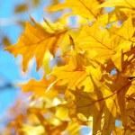 Autumn — Stock Photo #13491685