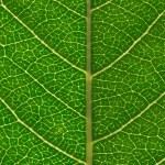 Green leaf — Stock Photo #17596827