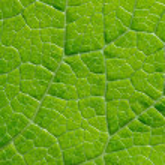 Green leaf — Stock Photo #17596845