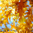 Stock Photo: Leaves on autumn