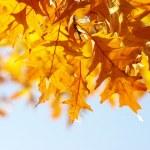 Autumn — Stock Photo #17597223