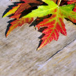 Autumn leaves — Stock Photo #17597285
