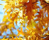 秋の葉 — ストック写真