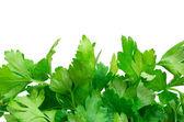 Herbes persil — Photo