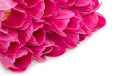 Květiny tulipány — Stock fotografie