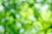 Yeşil zemin — Stok fotoğraf
