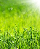 Fondo de hierba — Foto de Stock