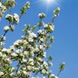 Blooming white flowers — Stock Photo #41635179