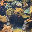 Coral reef in heat tropical sea — Stock Photo #44273871