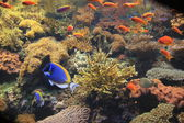 Coral reef in heat tropical sea — Stock Photo