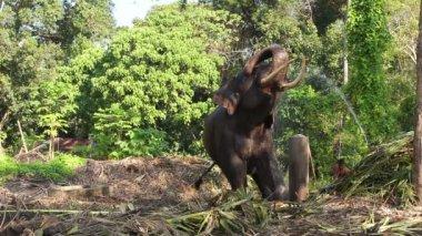 象の水で遊ぶ. — ストックビデオ