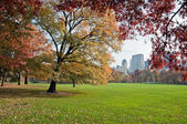 A green lawn in Central Park — Stock Photo