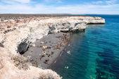 Kolonie zeeleeuwen op een strand — Stockfoto