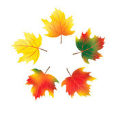Vector autumn maple leaves. Contains a gradient mesh. — Stock Vector
