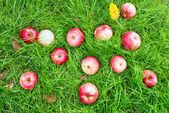 Windfall - apples lie on a meadow — Stock Photo