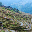 Stock Photo: Chinese village and rice fields