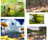 Collage about life of ants — Stock Photo