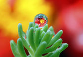 Dewdrops with reflection — Stock Photo