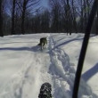 Riding on bicycle with two dogs. Winter time, slowmotion (2x), 1080p. — Stock Video