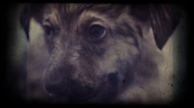 Homeless frightened puppy — Stock Video