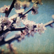 Vintage apple-tree flowers at spring - Stock Photo